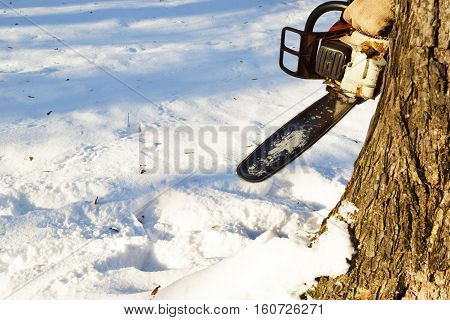Chainsaw is ready to cut down the dry tree in the winter.