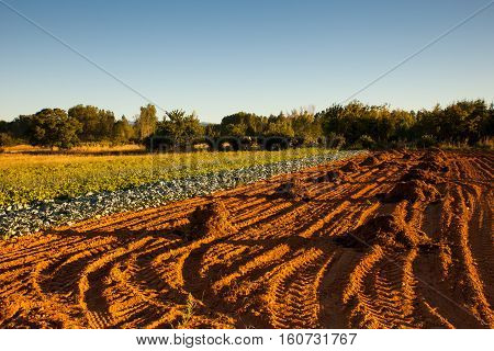 View of cultivated field in the spanish countryside