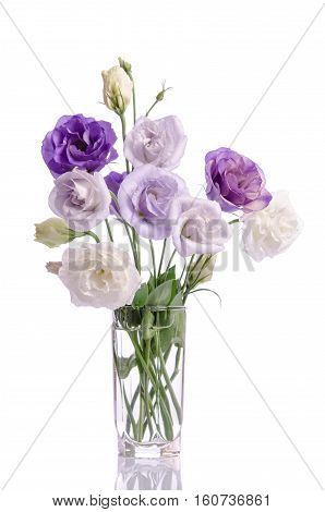 bunch of white and violet eustoma flowers in glass vase on white