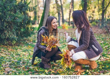 Two attractive stylish young woman collecting a handful of colorful fall or autumn leaves in a park chatting and smiling as they squat on the ground