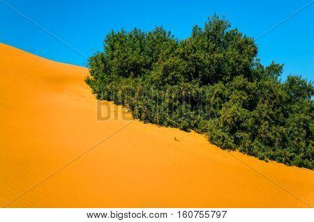 Sand Dunes And Vegetation In The Sahara Desert
