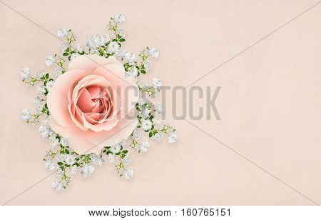 Collage of pink and white roses with shadows arranged on textured background.