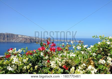White and pink flowers on the background of Mediterranean sea and Santorini caldera. Concept of best summer vacation at the seaside on Greek cyclades islands, freedom, luxury, trip