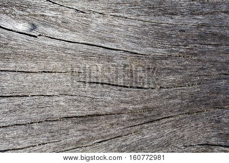 White wood texture close up photo. White and grey wood background. White old tree near the sea. Curves and lines on rustic timber. Rough timber texture. Sea wood backdrop. Grey old tree dark board
