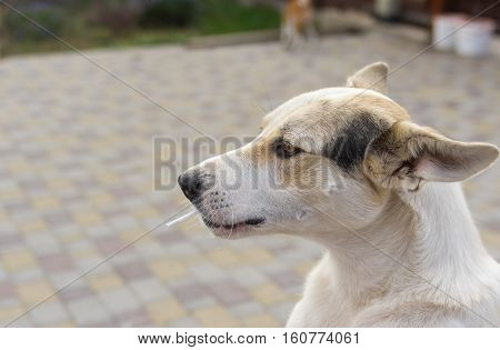 Outdoor portrait of positive mixed breed young dog sucking lollipop on a street