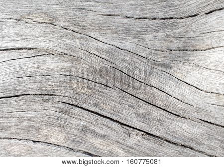 White wood texture close up photo. White and grey wood background. White old tree near the sea. Curves and lines on rustic timber. Rough timber texture. Sea wood backdrop. Grey old tree without bark