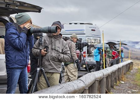 Yellowstone National Park, Wyoming, Usa - October 29, 2016: Wildlife Watchers Observing A Herd Of Wo