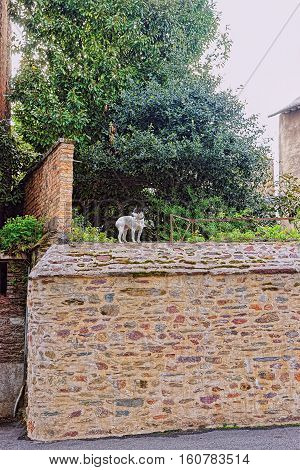 Little dog in the streets of Rennes Brittany region of France.