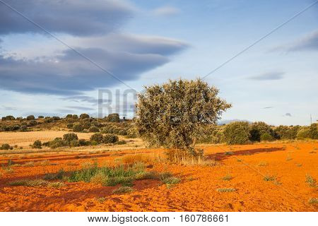 View of trees in the spanish countryside along the way of St. James