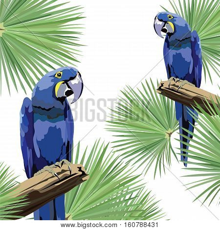Exotic tropical card with parrot birds and flowers. Vector Summer background illustration