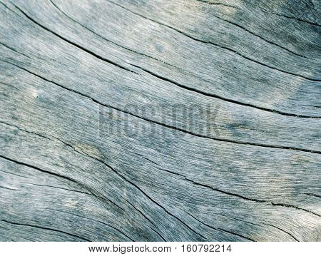 Blue wood texture close up photo. Curves and lines on rustic timber. Rough timber texture. Sea wood backdrop. Silver old tree toned image