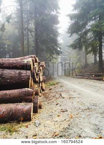 Pile Of Lumber In Pine Forest
