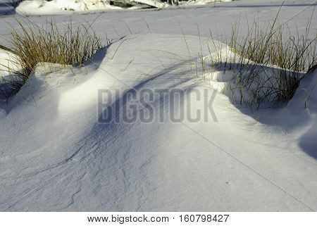 Marsh grass poking out of snow drift after New England storm