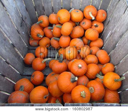 A weathered crate full of pumpkins at a farm stand.