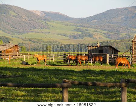 Horses and a stable with a backdrop of mountains. Shot at the Grand Teton National Park, US