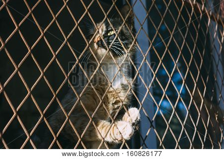 ginger and black cat trap and is stuck in a steel wire nettingcagehoping for freedom with sad feeling
