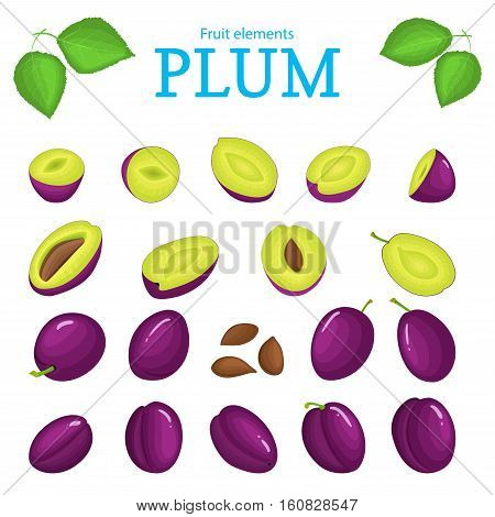 Vector set of purple fruits. Plum fruit, whole, peeled, piece of half, slice leaves, seed. Collection of delicious red plums designer elements for use in packaging design projects flyer healthy eating