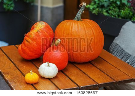 Still Life with a few pumpkins of various colors and sizes