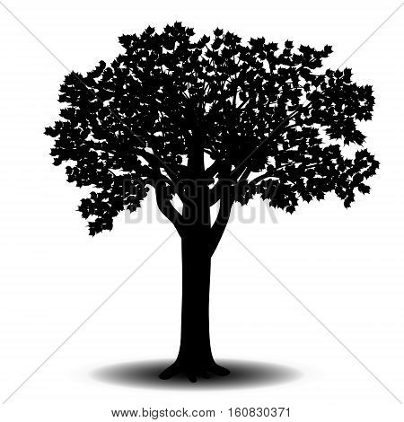 silhouette detached tree sycamore with leaves on a white background