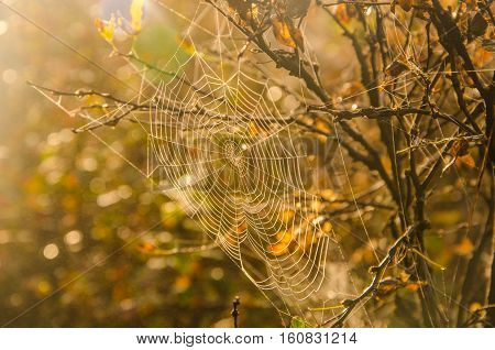 Morning fog and cobwebs in the dew. dew on the lush green grass a summer misty morning. the sun's rays fall on the wet grass.