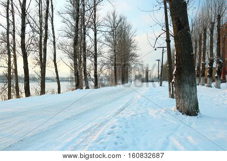Beautiful winter day. Snow on the road. Snow alley. Trees under the snow. The low winter sun.