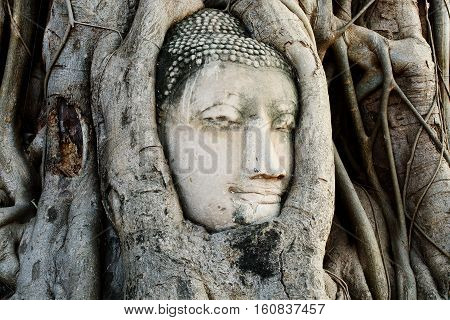 Head of Buddha Statue with the Tree Roots at Wat Mahathat historic site of Ayutthaya province Thailand.