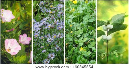 Collage of four images of different plants.
