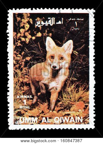 UMM AL QIWAIN - CIRCA 1972 :  Cancelled stamp printed by Umm Al Qiwain, that shows Fox.