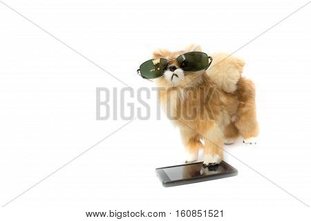 doll dog wearing sunglasses and mobile phone on white background with copy space for add text