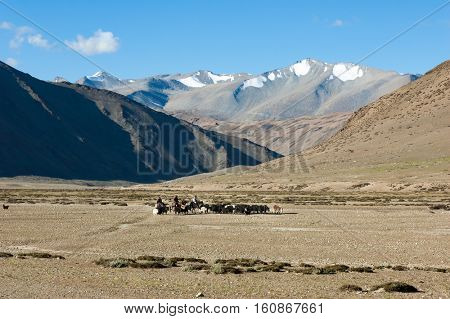 Tibetan nomads travelling with horses and yaks. Ladakh highlands, India.