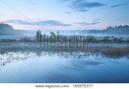 misty morning on swamp at dusk in spring