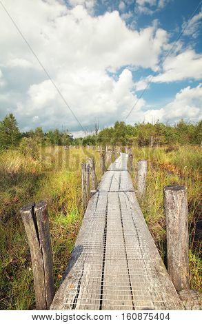 wooden path on swamp in summer Dwingelderveld Netherlands