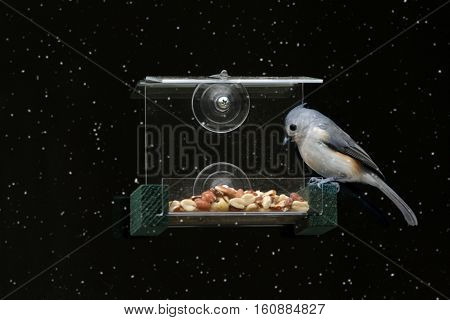 Tufted Titmouse (Baeolophus bicolor) on a window feeder with a black background
