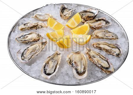 metal tray with ice and oysters. Isolated