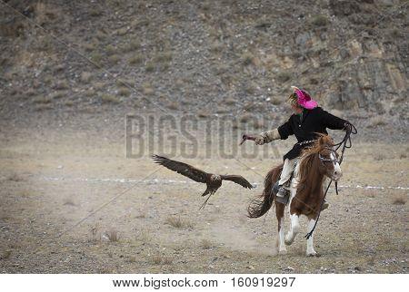 Bayan Ulgii Mongolia October 4th 2015: Eagle hunter training his Altai Golden Eagle