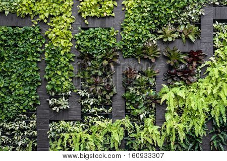 Green wall, eco friendly vertical garden background