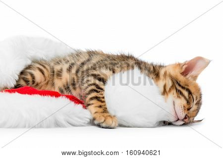 Fluffy Little Kitten Tired After Playing And Fell Asleep