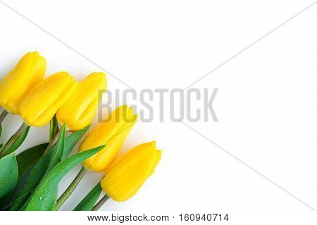 Tulips In The Left Corner Of A White Background - A Laconic Festive Postcard