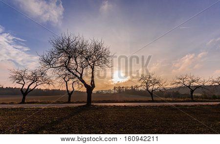 Sunset and silhouettes of trees. Moravian landscape Lhota u Lysic.