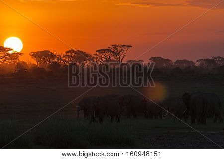 Evening landscape with elephants. Nightlife. Amboseli, Kenya