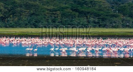 Landscape with flamingos. Pink birds. Nakuru, Kenya