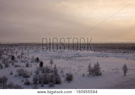 Winter landscape with forest in snow in the evening sunset. North