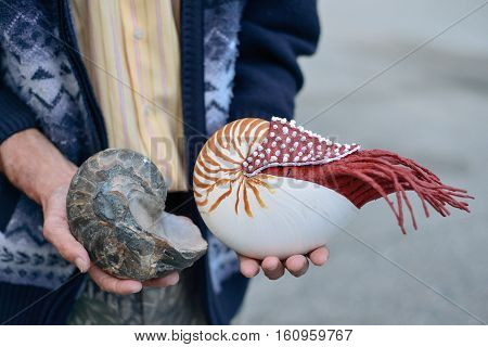 ammonite ancient archaeologist in the hands of the scientist the concept of the history of the prehistoric era