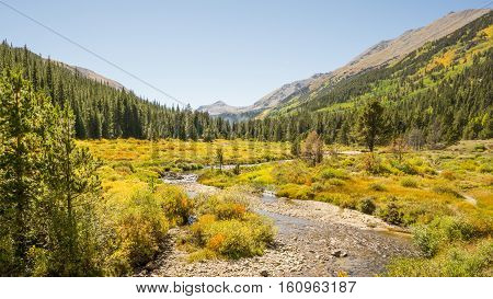 Autumn colors in Pine Valley in the Collegiate Peaks Wilderness Pike and San Isabel National Forests near Buena Vista Colorado.