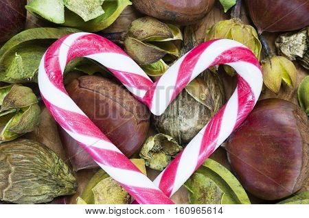 A background with fresh raw chestnuts and candy canes for Christmas.