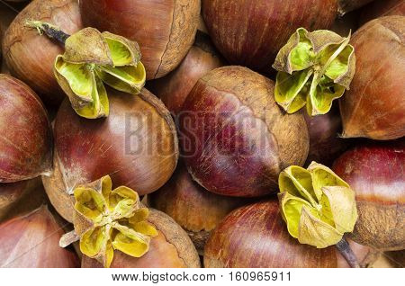A background with lots of fresh raw chestnuts.