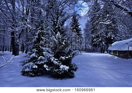 Wonderful winter night with full moon snowy fir trees and cozy house in the snow.