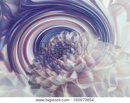 dahlia white-blue transparent flower on the background of rainbow spiral. floral composition. floral background. Nature.
