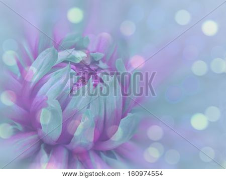turquoise-purple flower on the transparent blue blurred background. Close-up. floral composition. floral background. Nature.