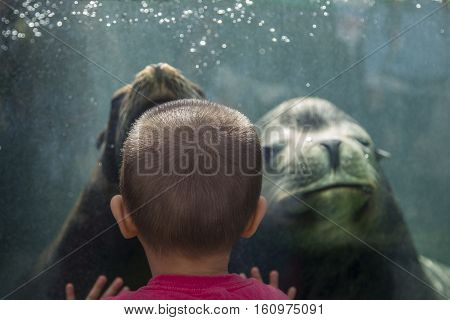 TOKYO, JAPAN - OCTOBER 12, 2016: Unidentified children with sea lion at Ueno zoo in Tokyo Japan. It is Japan oldest zoo opened on March 20 1882